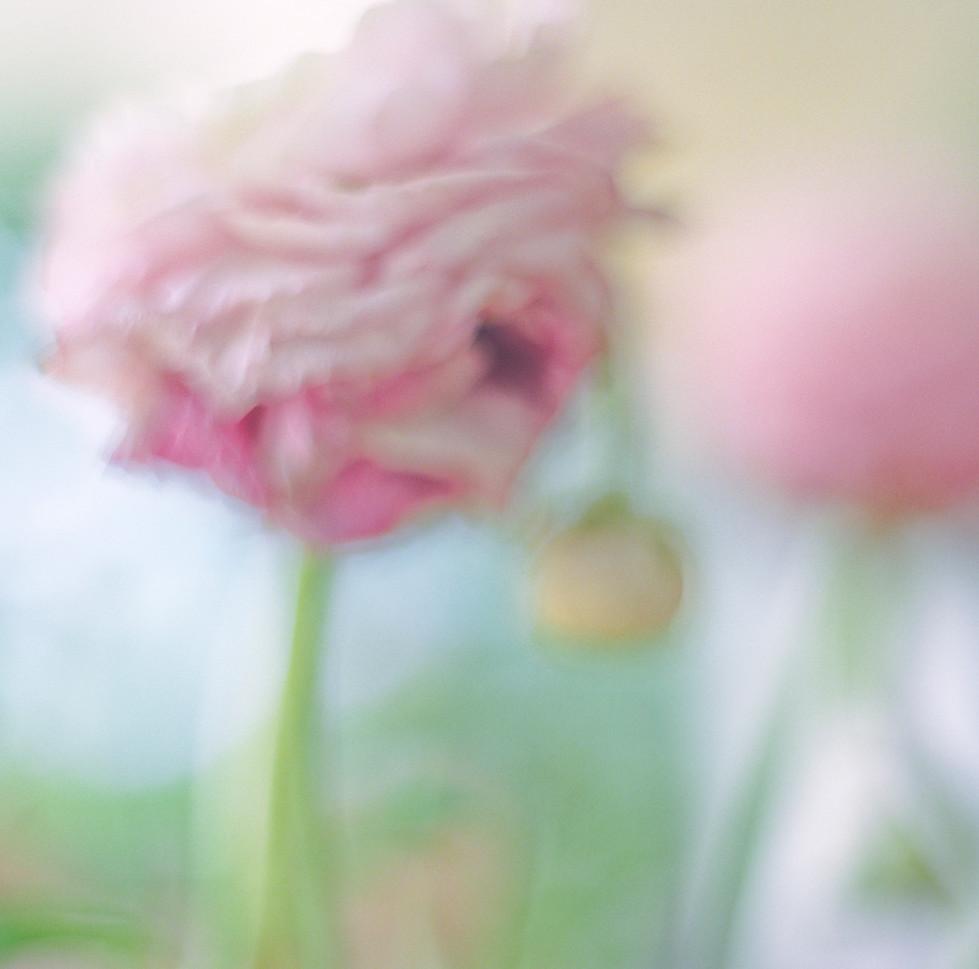flowers II 05