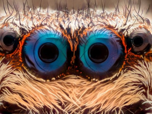 Scientists Have a Secret Weapon to Defeat Arachnophobia, And It's Hidden Inside You