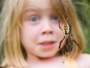 Heartbeats could be key to treating fear of spiders