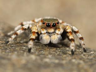 An End to Arachnophobia Just a Heartbeat Away
