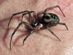 How a cure for arachnophobia and other commons phobias could be just around the corner