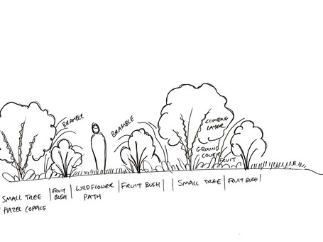 Gardening to Mimic woodland