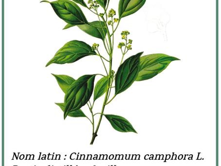 L'essentiel de Christelle - Zoom sur l'huile essentielle de ravintsara : la star de l'hiver