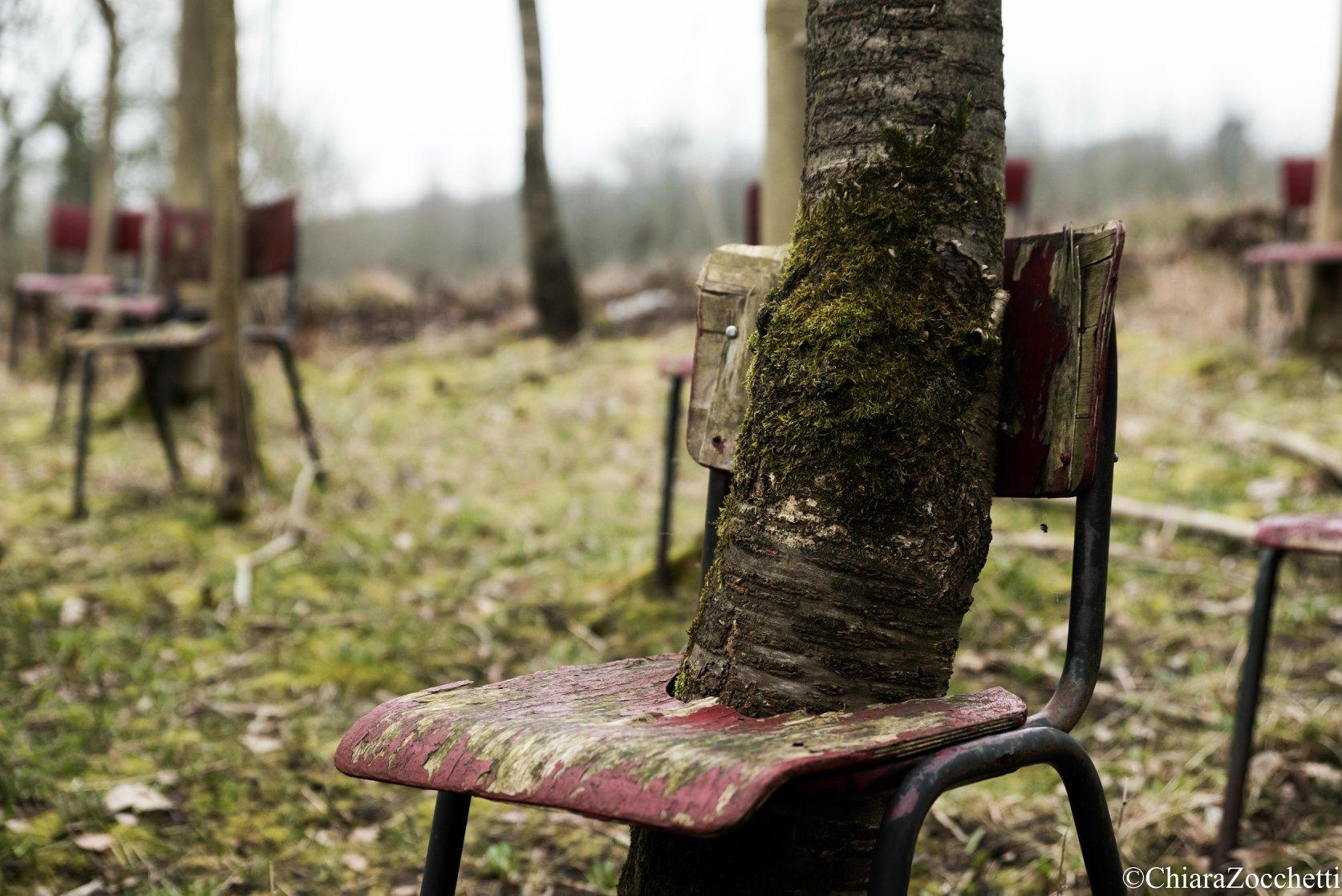 Les arbres dans les chaises