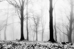 """""""Les arbres et le brouillard"""""""