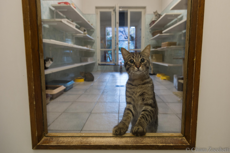 gatto in rifugio