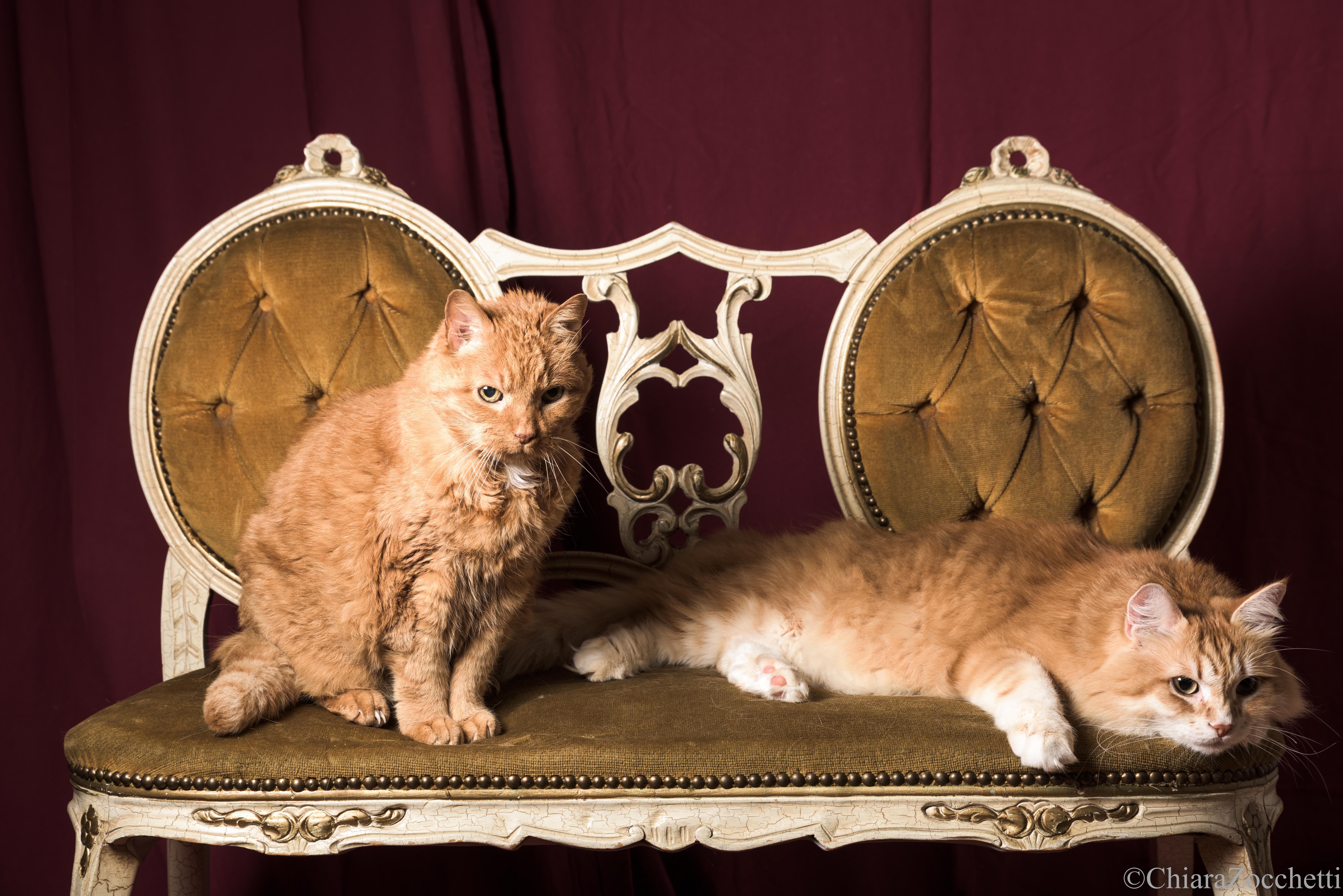 Cirillo e Fausto