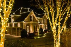white lighting tree lighting
