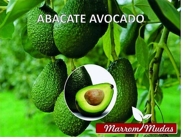 abacate%2520AVOCADO_edited_edited.jpg