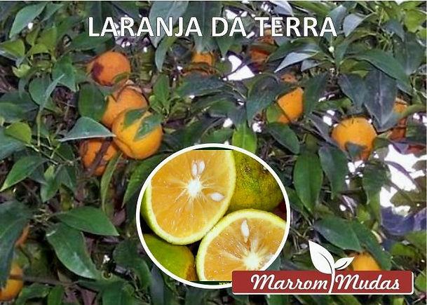 laranja%20da%20terra_edited.jpg