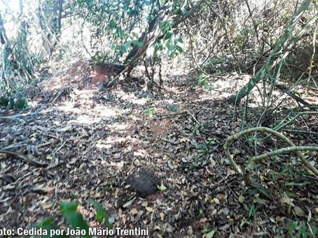 Danificar vegetação nativa rende multa de mais de R$ 2 mil em Quintana
