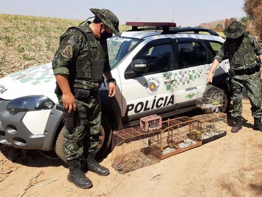 Polícia Ambiental aplica multa de R$ 4 mil em bastense por caçar e manter aves em cativeiro