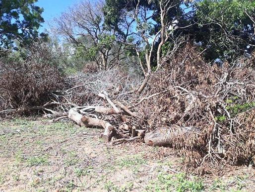 Polícia Ambiental de Tupã flagra corte de árvores nativas em Rinópolis