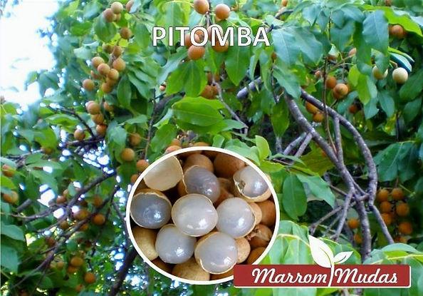pitomba_edited.jpg