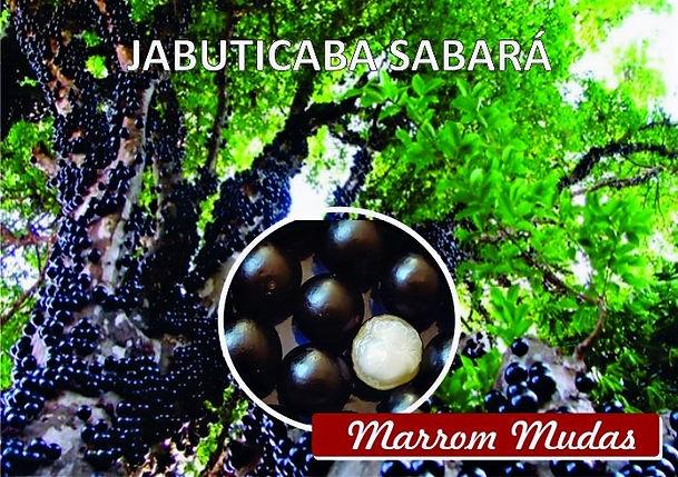 jabuticaba%20sabara_edited.jpg