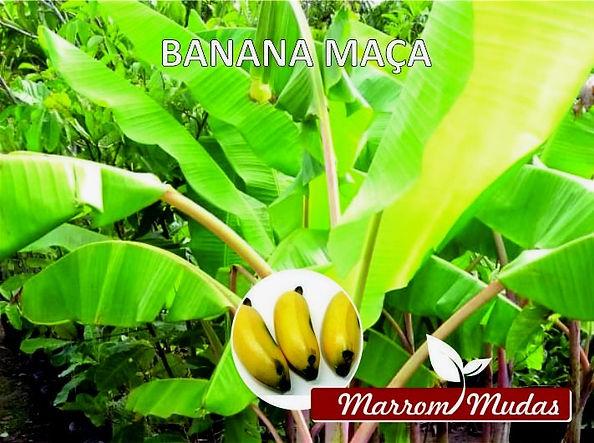 banana_ma%C3%A7a_edited.jpg