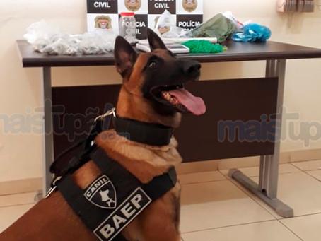 Polícia Civil de Herculândia, Polícia Militar e BAEP apreende grande quantidade de drogas