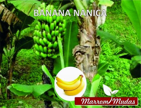banana%20nanica_edited.jpg