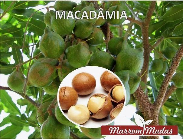 macadamia_edited.jpg
