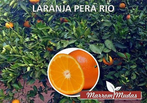 laranja%20pera%20rio_edited.jpg