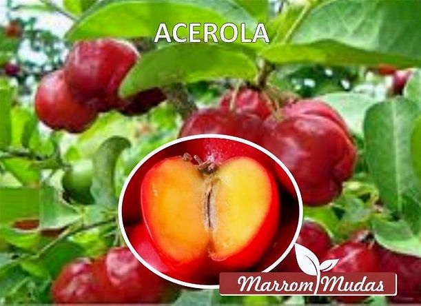 acerola_edited.jpg