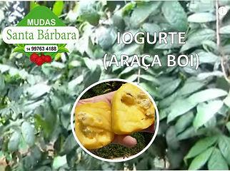 iogurte_araca_boi.jpg