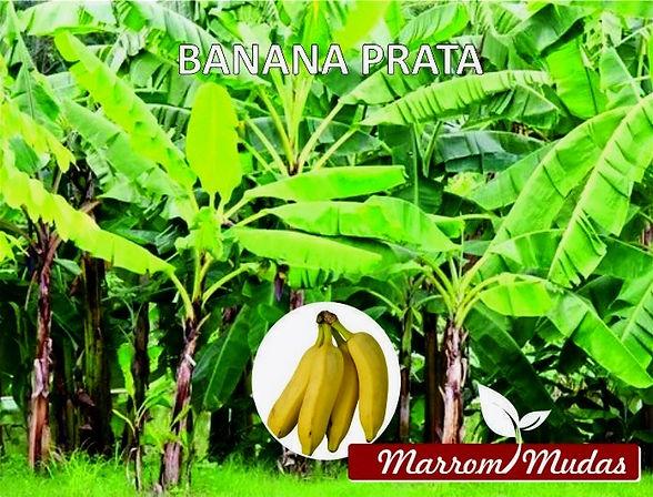 banana%20prata_edited.jpg