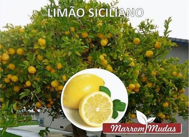 lim%C3%A3o_siciliano_edited.jpg