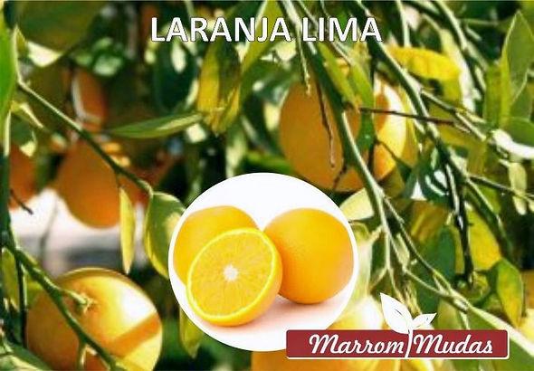 laranja%20lima_edited.jpg