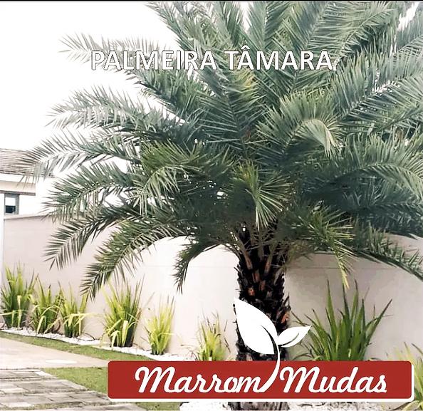 palmeira%20tamara_edited.png