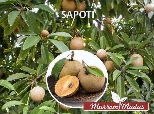sapoti_edited.jpg