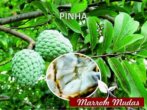pinha_edited.jpg