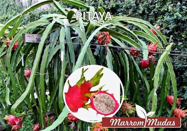 pitaya_edited.jpg