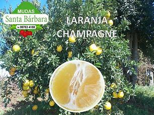 laranja_champagne.jpg