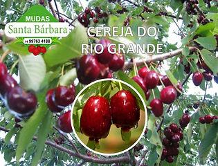 cereja_do_rio_grande.jpg
