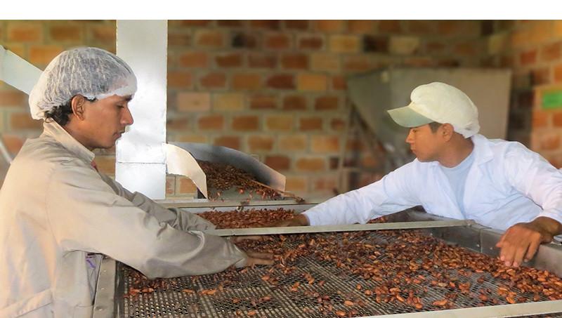 Procesamiento de cacao