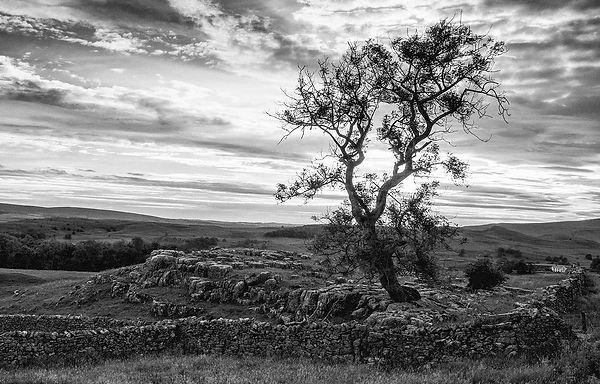 Lone Tree-mem28.jpg