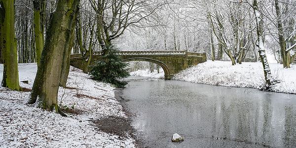 Snow in the Park - Member 74.jpg
