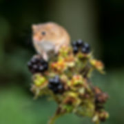 On top of the brambles - Member 77.jpg