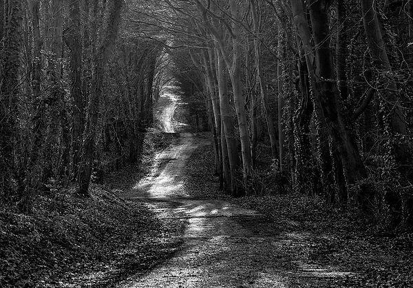 Path Through the Woods - Member 74.jpg