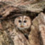 Peek a Boo! - Member 77.jpg
