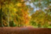 Glorious autumn - Member 68.jpg