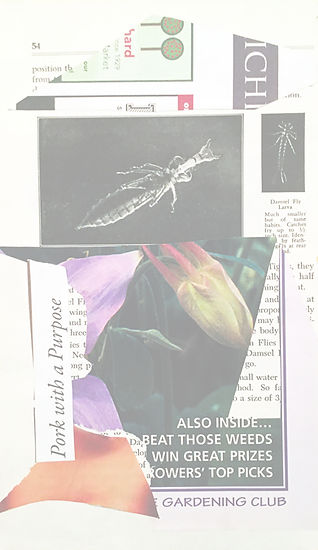 Collage by Fuhrer, mostly illegible text