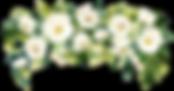 floral_header_drops_2[1].png
