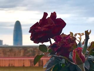 Flores disecadas (LV)