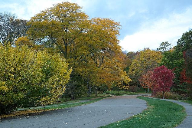 Arnold_Arboretum_in_Autumn.jpg