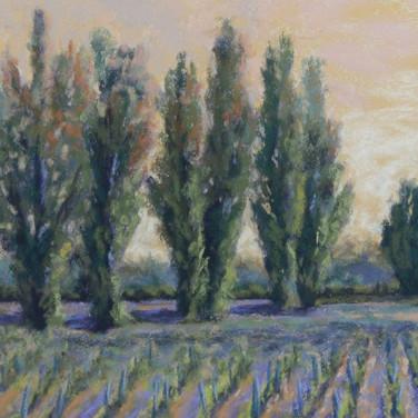 Beaune Tree, Pastel