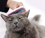 cat feeding2