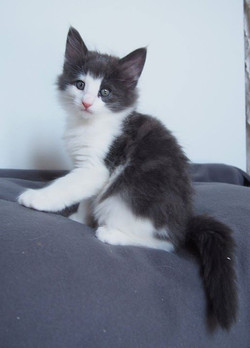 Aiden - Male - 7,3 weeks old
