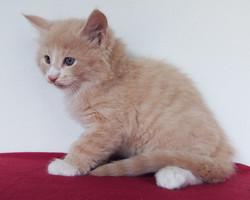 Copale- male -6 weeks old